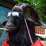 Photo Jolts! How is this Goat a Metaphor for Charity?