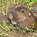 Photo Jolts! How is this Gopher a Metaphor for Birth?