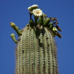 Photo Jolts! How is this Cactus Flower a Metaphor for Death?