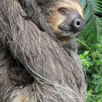 Photo Jolts! How is this Sloth a Metaphor for Death?