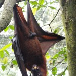 Photo Jolts! How is this Fruit Bat a Metaphor for Ego?