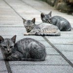 Photo Jolts! How are these Cats a Metaphor for Design?